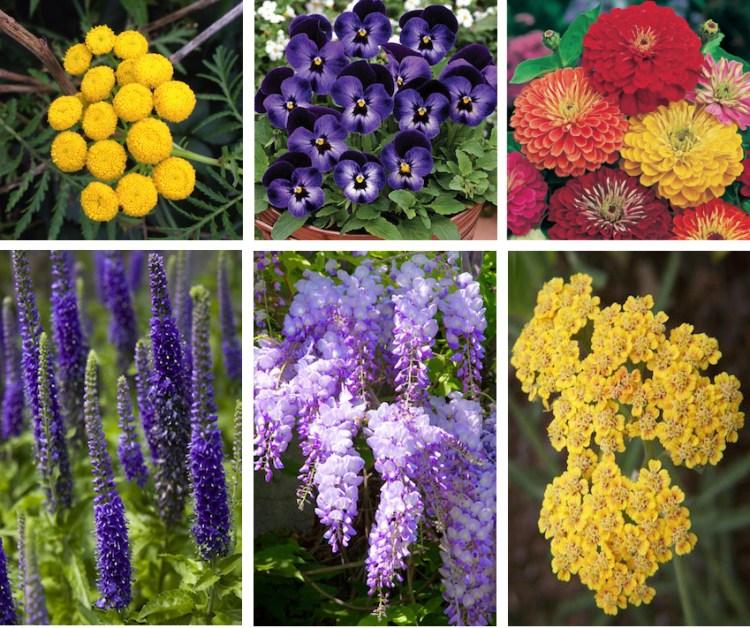 z-flowers