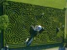 Longleaf maze