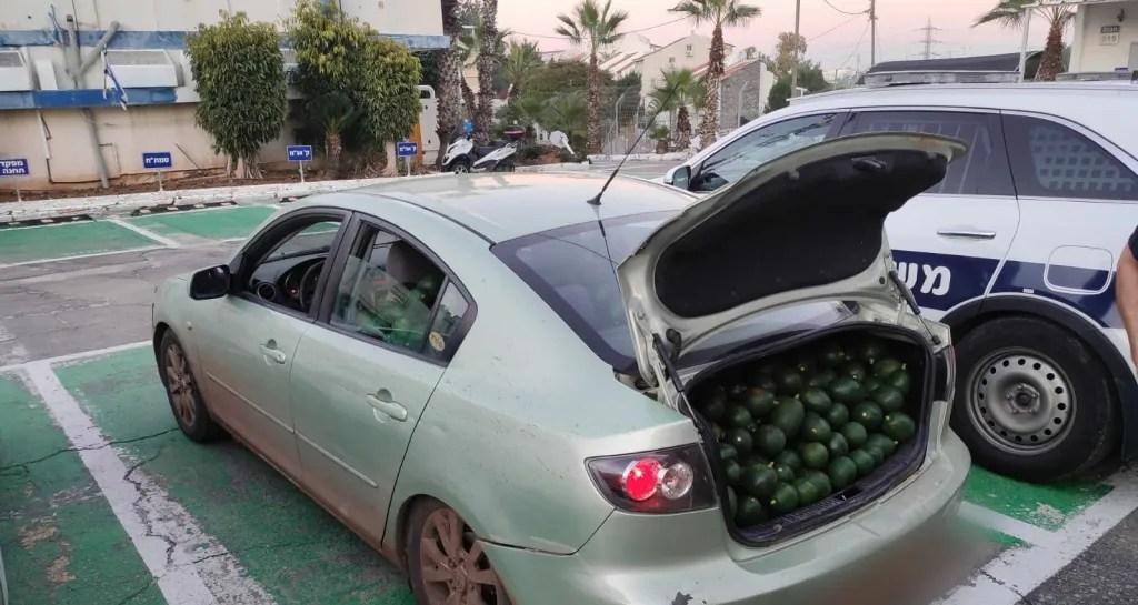 גניבת אבוקדו מקיבוץ גליל ים המשטרה תפסה את הרכב