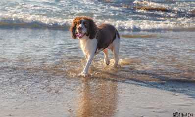 כלב בים - חופי הרצליה