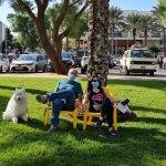 נופשים על כסאות בכיכר דה שליט