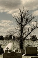 A large dead tree resides over a silent kingdom of the dead.