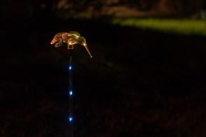 Lights at night-5