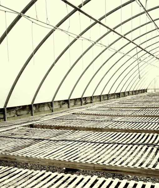 Empty Greenhouse by Mary G. Thames