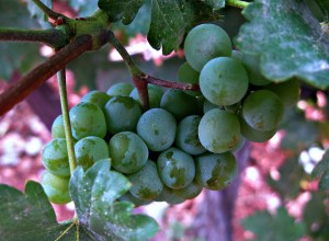 """I am the vine. You are the branches..."" (John 15)"
