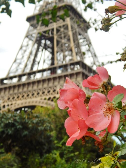 close up of pink flowers with eiffel tower in soft focus in the background