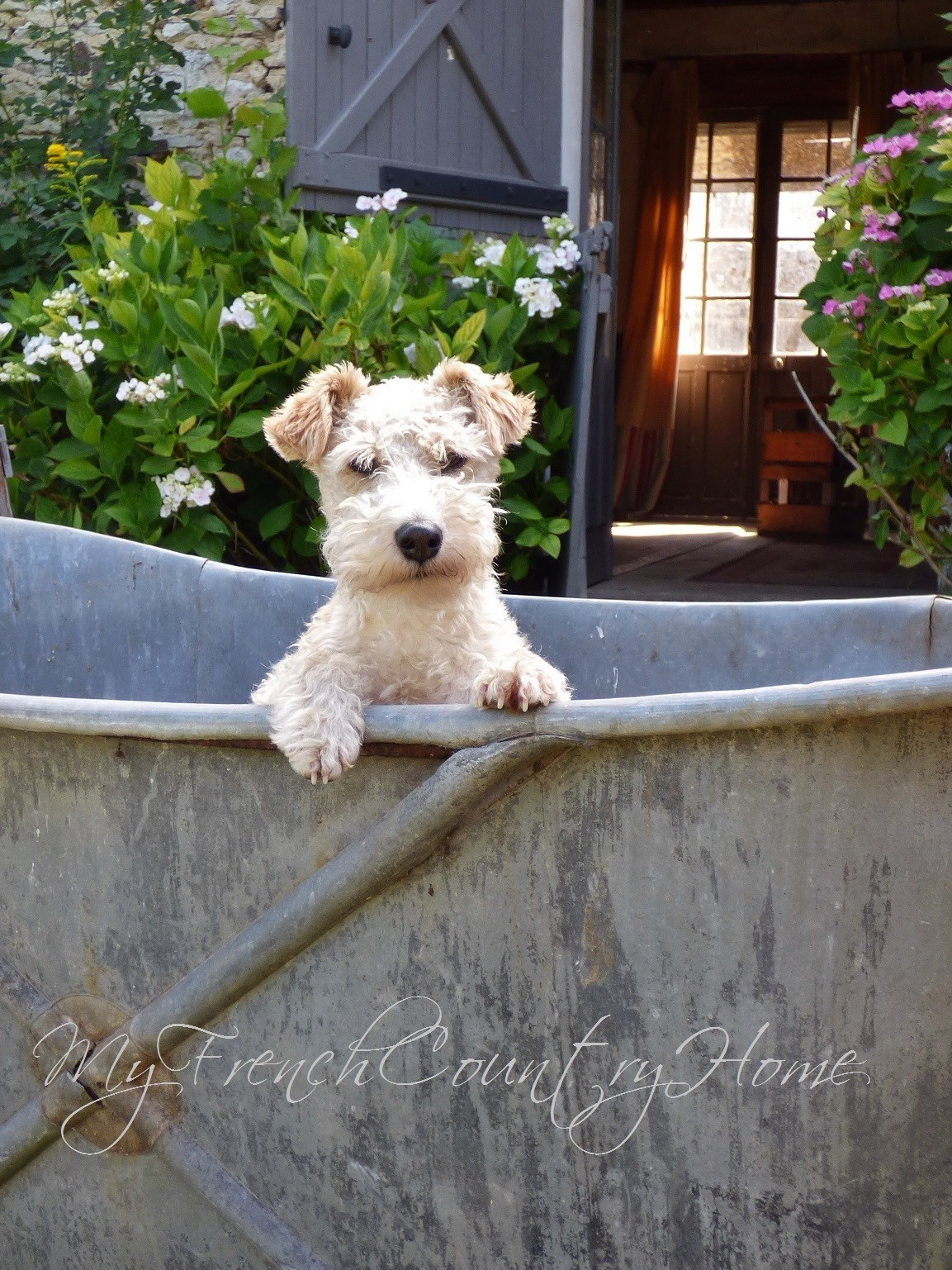 fox terrier ghetto in bathtub