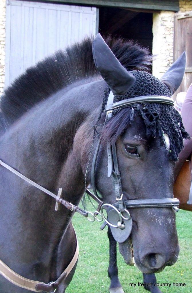 iris the nughty pony