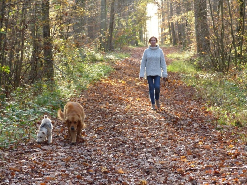 walking in the forest with the dogs