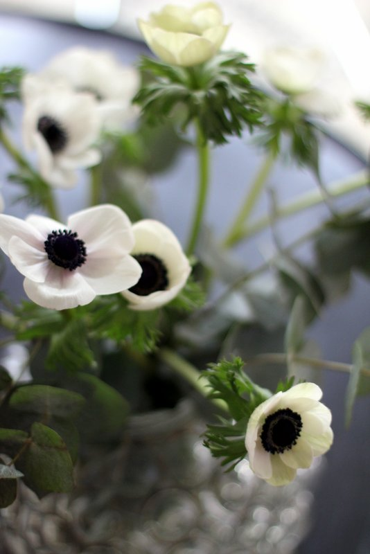 white anemones in a vase