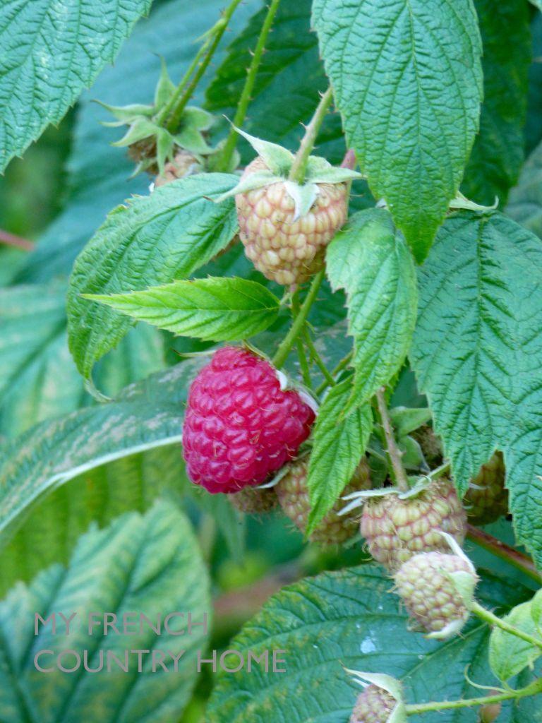 my-french-country-home-raspeberry-jam1