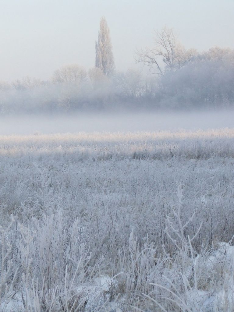 frosty morning in the valley