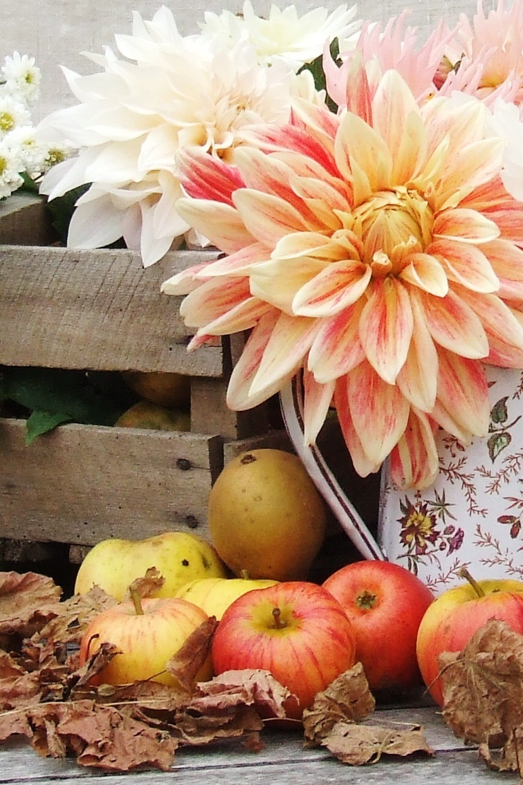 french country flowers - dahlias and apples