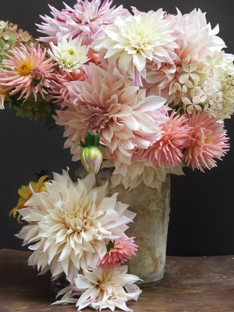 french country flowers - dahlias 1