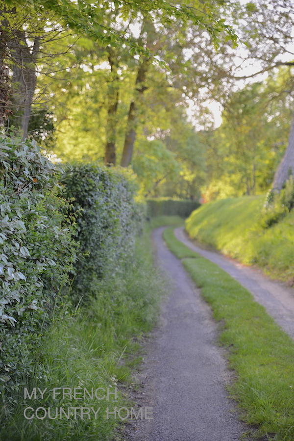 country path in evening sunlight