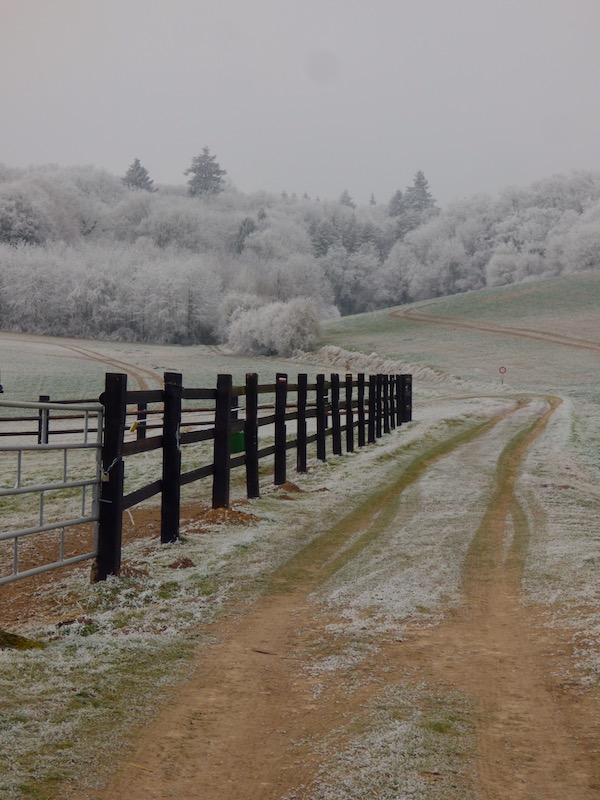 winter path home