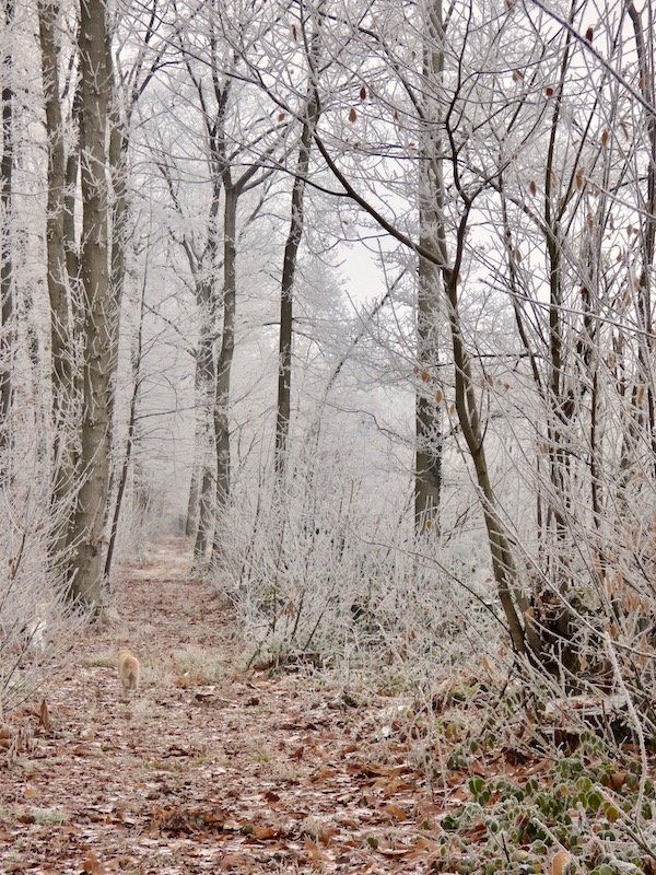 winter path through forest