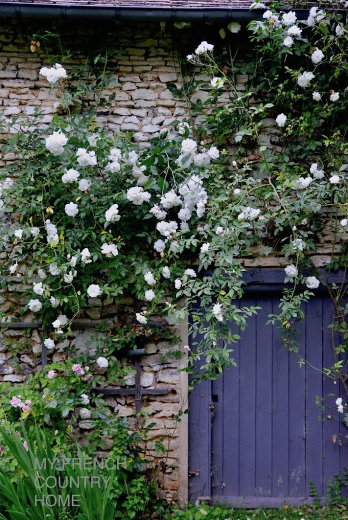 white roses on barn wall