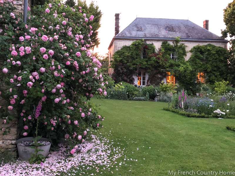 Pink rose petals at sunset- My Garden Parterres- MY FRENCH COUNTRY HOME
