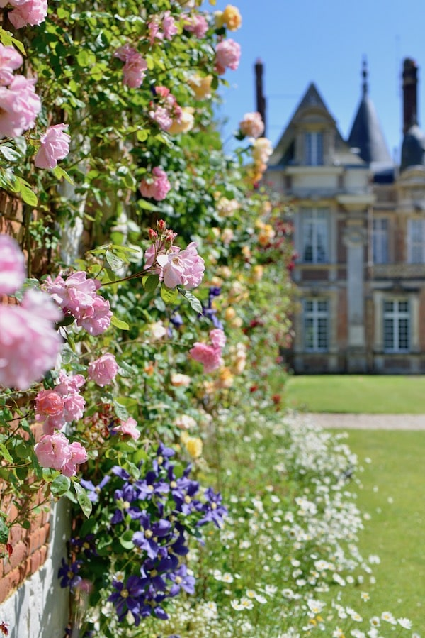 Pink roses that line the walls of French Chateau Miromesnil