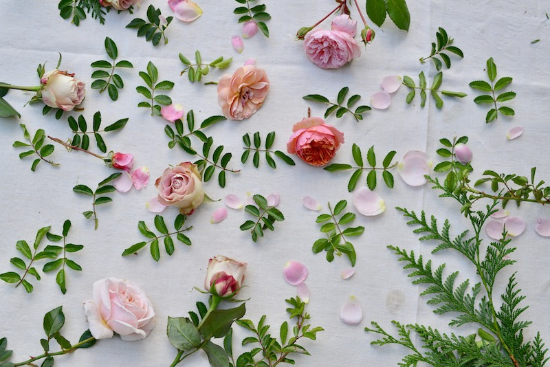 pink roses and green rose foliage