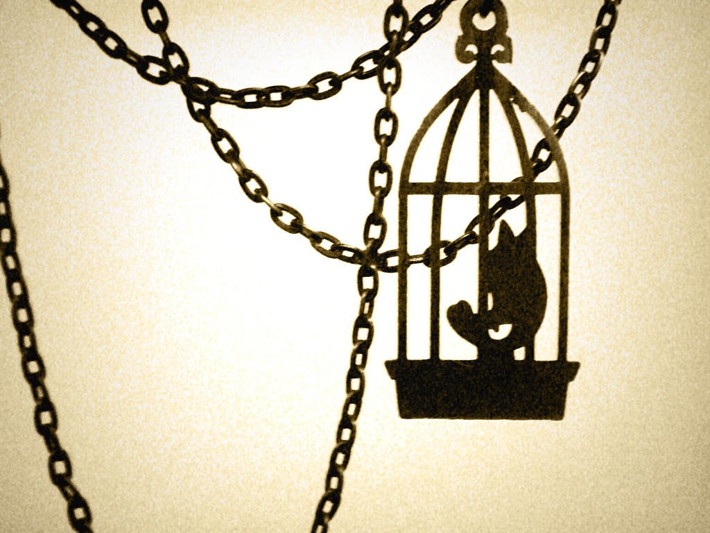Favorite Poems I Know Why The Caged Bird Sings Maya