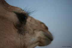 For all those with eyelash extensions: eat your heart out! Not only Omani children have such beautiful long eyelashes…