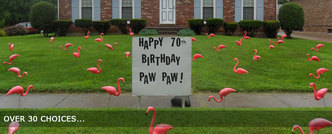 Best Lawn Display Flamingo Greetings Birthday Lawn Decorations This Month