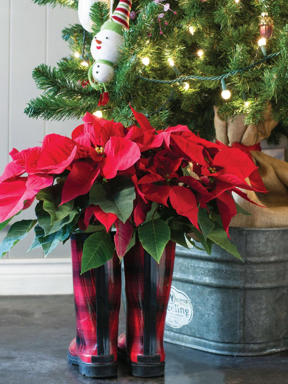 Best Decorating With Poinsettias Hgtv This Month