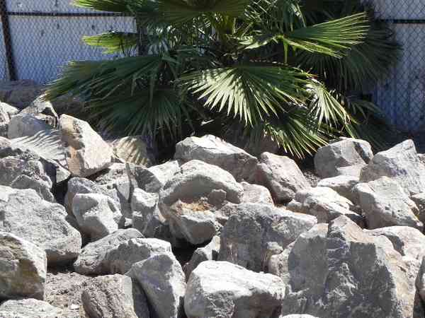 Best Decorative Rocks And Stones – Brentwood Ca Brentwood This Month