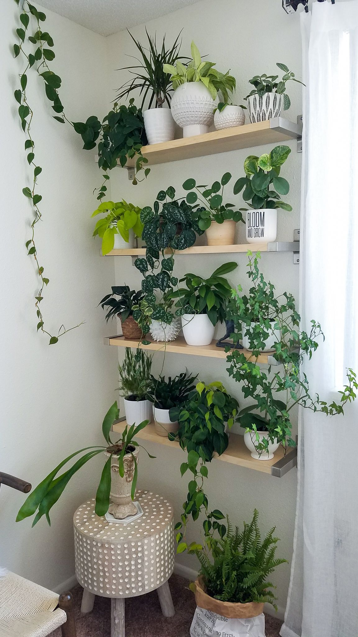 Best Plant Wall Houseplants Decorating With Plants Plant This Month