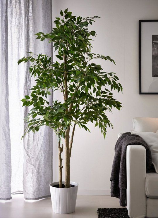 Best 5 Times That Fake Plants Make The Cut Or Do They Diy This Month