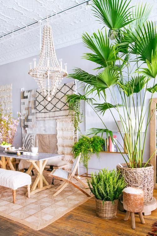 Best 25 Tropical Outdoor Decor Ideas On Pinterest This Month