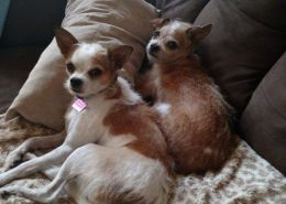 Safe Haven Animal Sanctuary Pet Adoption Happily Ever After Story