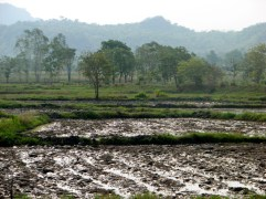 The landscape outside of Ja's village. It brings back many memories of planting and harvesting rice.
