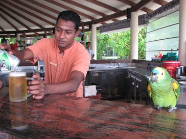 This is the beach bar complete with its own parrot bartender.