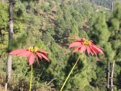 Some flowers at Borderlands.