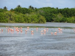 Flamingos hanging out on the island.