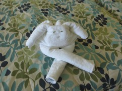 One of the best parts of an all-inclusive are the towel animals the maid makes for you. The better the tip, the better the animal. This was worth 3 pesos.