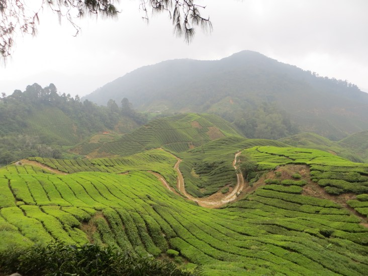 Lots of tea grown in the Cameron Highlands. It reminded us a lot of the Sri Lankan hill country.