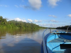 We also took a riverboat cruise where we saw all sorts of monkeys and birds - and we almost saw a crocodile.