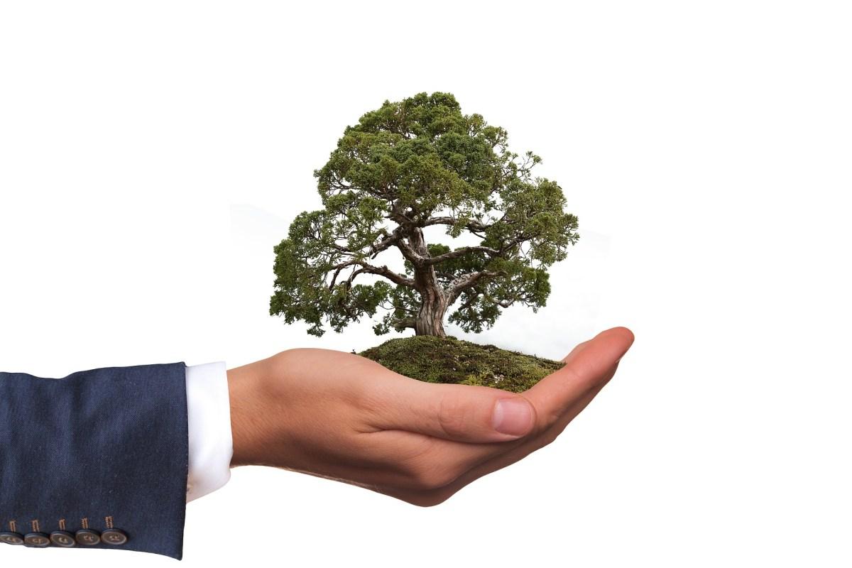 Paraszat Szoftim – Drzewa i litość