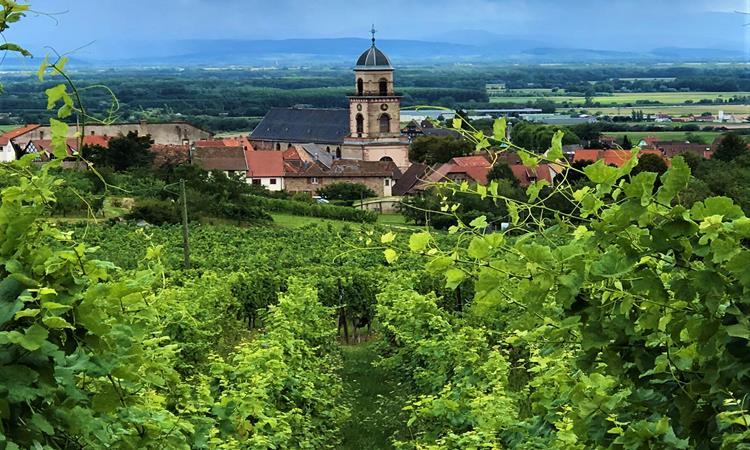 Views of Vineyards in the Alsace