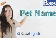 Pet Names in English