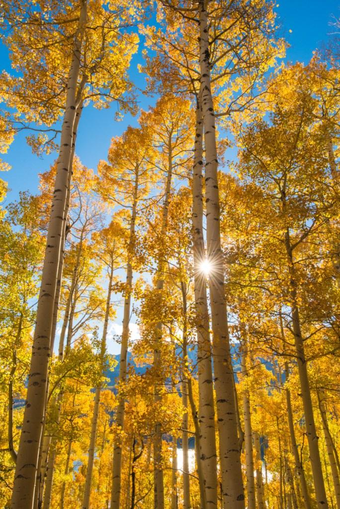 Aspen Trees with Sunburst, San Juan Mountains, Colorado