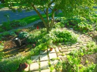 How To Build A Cocktail Herb Garden Patio - Shawna Coronado
