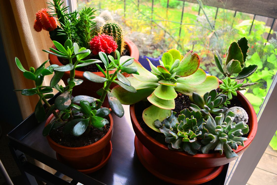 Exotic Purchase Houseplants