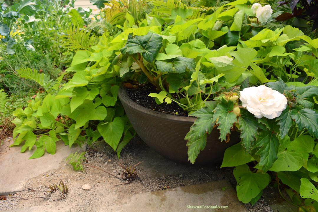 Organic Container Gardening Tips  Shawna Coronado