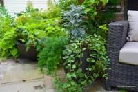 Organic Container Gardening Tips - Shawna Coronado