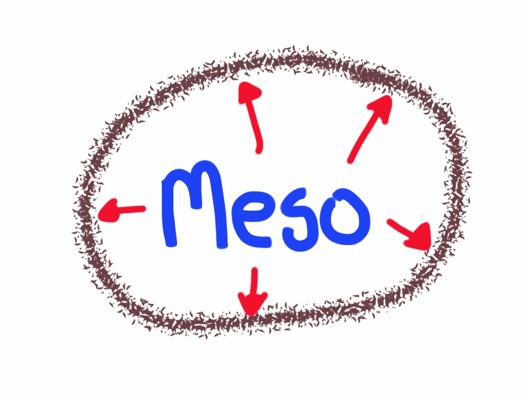 Meso Summer Academy 2017 To Focus On Meso Organizations Shawn